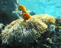 """Mons. Bernardito Auza: """"Es esencial preservar los fondos marinos"""""""