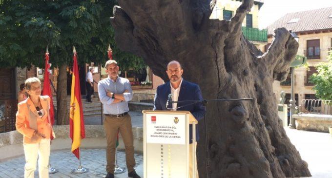Miraflores de la Sierra recupera su álamo centenario, símbolo del municipio