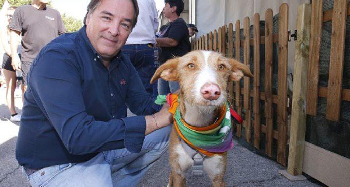 El abandono de mascotas en la Comunidad registra los valores más bajos en el primer semestre de 2016