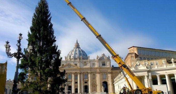 El árbol del Navidad ya está en la plaza de San Pedro