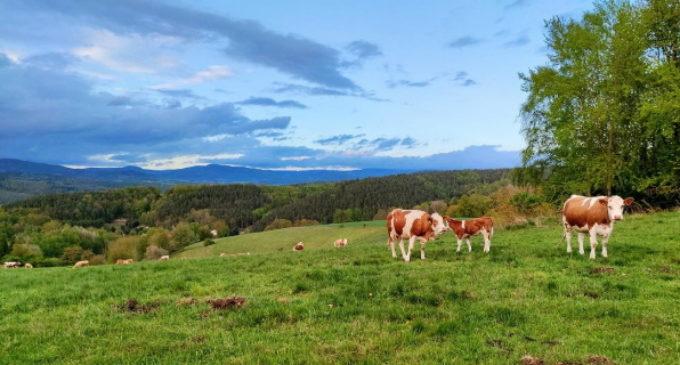 La Comunidad de Madrid aumenta las ayudas para apoyar a los jóvenes agricultores y ganaderos