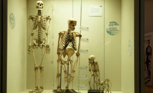 Bioética: Redes de genotipos y evolución biológica