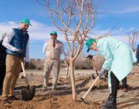 Cifuentes participa en la plantación de 800 árboles en Colmenar Viejo