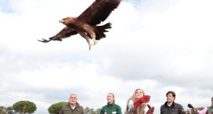 Cifuentes participa en la suelta de un águila imperial ibérica recuperada en el Centro de Animales Silvestres de la Comunidad