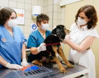 Díaz Ayuso firma un protocolo pionero en España para proteger a los animales de compañía frente al COVID-19