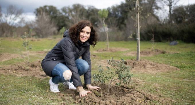 Díaz Ayuso inicia el Arco Verde con la plantación de los primeros 350 árboles vinculados a la COP25