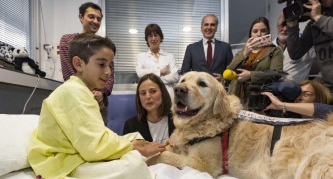 El Hospital 12 de Octubre demuestra que la terapia asistida con perros puede reducir el dolor y la ansiedad en niños ingresados en Cuidados Intensivos