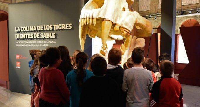 El Museo Arqueológico Regional organiza talleres infantiles sobre los fósiles de la Colina de los Tigres dientes de sable