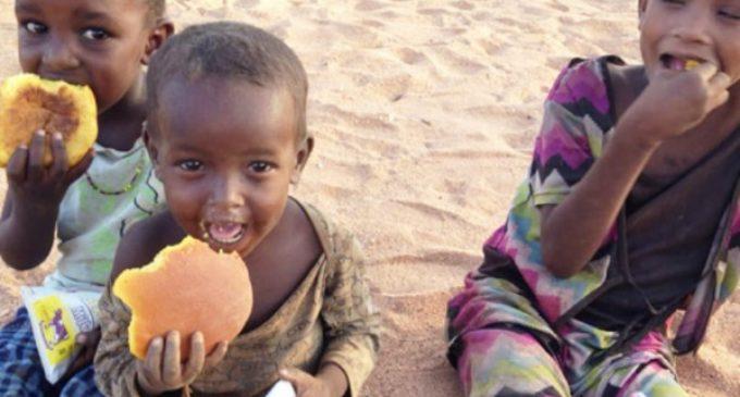 El norte de Kenia, sin agua ni comida
