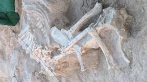Fósil de Jirafa 1