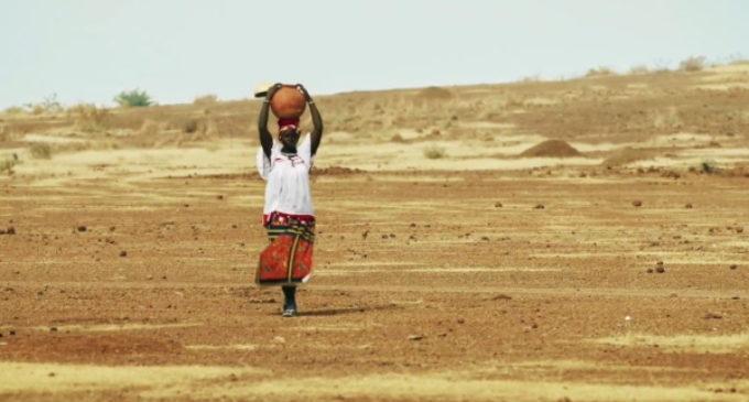 FAO: 43 millones de personas en situación de emergencia alimentaria