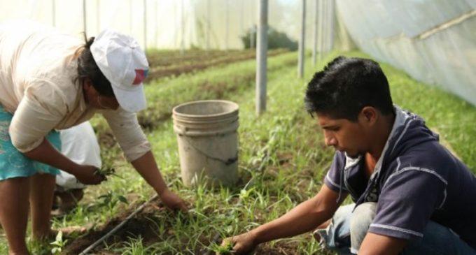 Agricultura: El Fondo Internacional financiará más proyectos para jóvenes