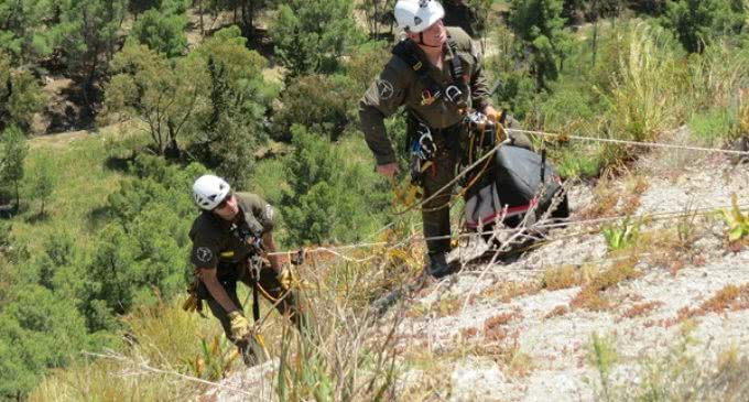 GREFA colabora en el seguimiento por GPS de veinte águilas de Bonelli en Sicilia