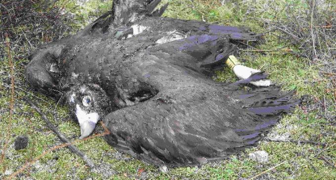 El envenenamiento de fauna más grave en la Comunidad de Madrid se salda con una sentencia condenatoria