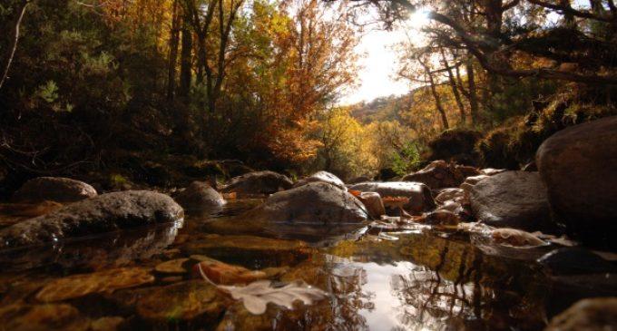 La UNESCO declara al Hayedo de Montejo Patrimonio Natural de la Humanidad