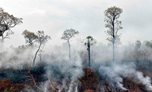 Incendios en la Amazonía: Los obispos de Bolivia piden acciones solidarias y efectivas