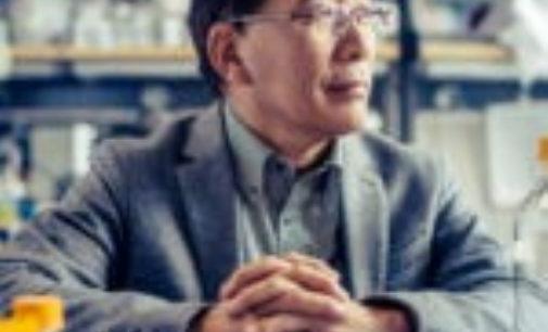Japón da nuevos pasos en la investigación con quimeras humano-animales