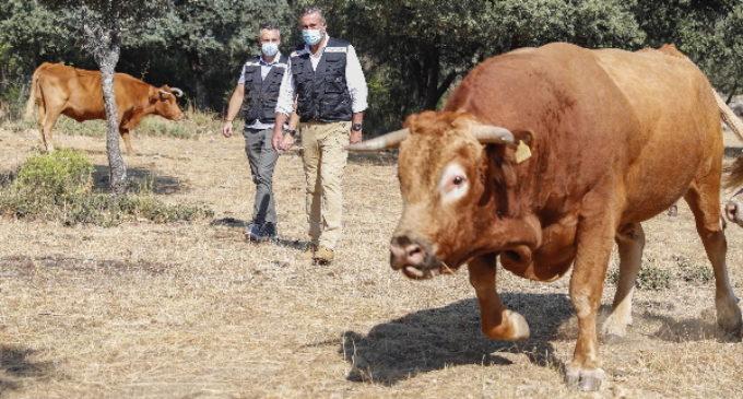 La Comunidad promueve el pastoreo controlado como medio para prevenir los incendios forestales