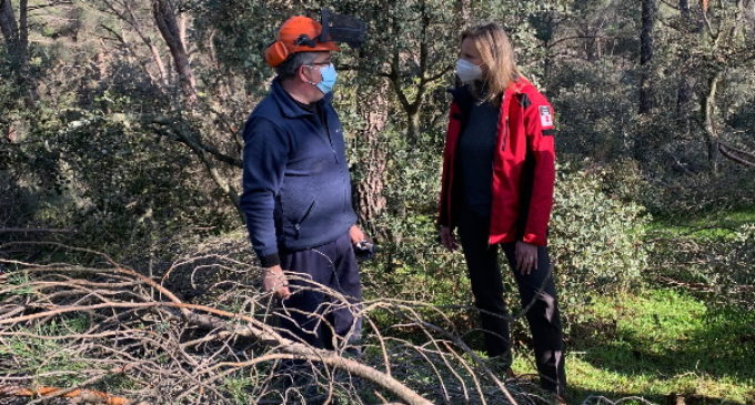 La Comunidad de Madrid actuará sobre más de 600 hectáreas de 31 municipios dañadas por la borrasca Filomena
