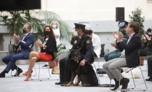 Madrid apoya la campaña Adopta un jubilado, que busca un hogar a perros policía que terminan su vida de servicio
