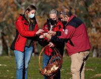 La Comunidad autoriza la recogida de setas en más de 7.000 hectáreas del Parque Nacional de la Sierra de Guadarrama
