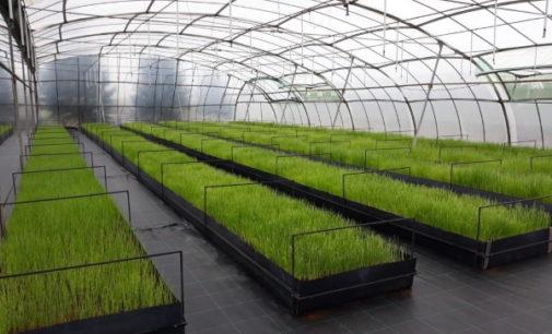 La Comunidad de Madrid donará a los agricultores 451.000 plantones de variedades hortícolas