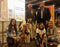 La Comunidad de Madrid promueve la adopción responsable de animales de compañía en la Feria 100×100 Mascota