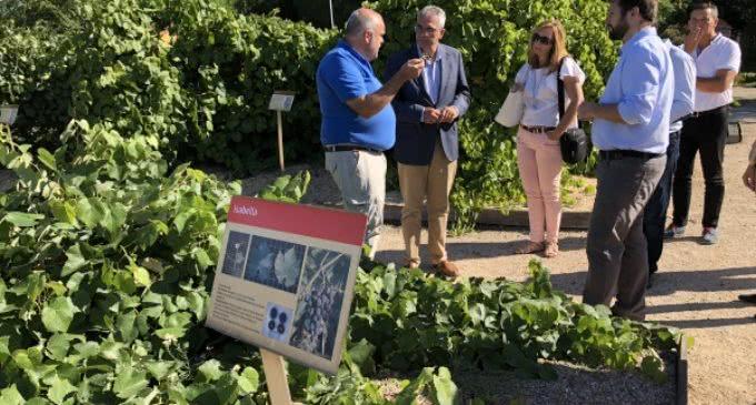 La Comunidad desarrolla programas de investigación para mejorar el sector vitícola
