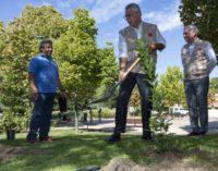 La Comunidad distribuirá 10.000 madroños para su plantación en montes y espacios protegidos