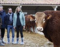 La Comunidad fomenta la calidad de los productos cárnicos a través del testaje de las ganaderías