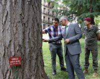 La Comunidad manifiesta su compromiso por el cuidado de los árboles singulares