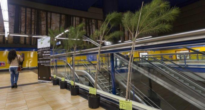 La Comunidad se une al Día de los Bosques con la plantación de 100 nuevos árboles en las instalaciones de Metro