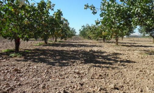 La Comunidad de Madrid lamenta que el Gobierno no haya contado con las organizaciones profesionales agrarias en la elaboración de la nueva PAC