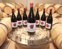 Las ventas de los Vinos de Madrid con Denominación de Origen superaron los 4 millones de botellas en 2017