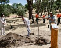 Majadahonda: El Ayuntamiento celebra el Día del Medio Ambiente con una plantación de 50 árboles