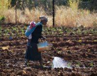 Expertos de 8 países africanos acuerdan en Nairobi avanzar juntos para fortalecer el Derecho a la Alimentación en el continente