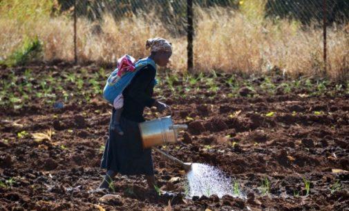 Manos Unidas reclama un cambio en las políticas comerciales, medioambientales y financieras para luchar contra la pobreza en África
