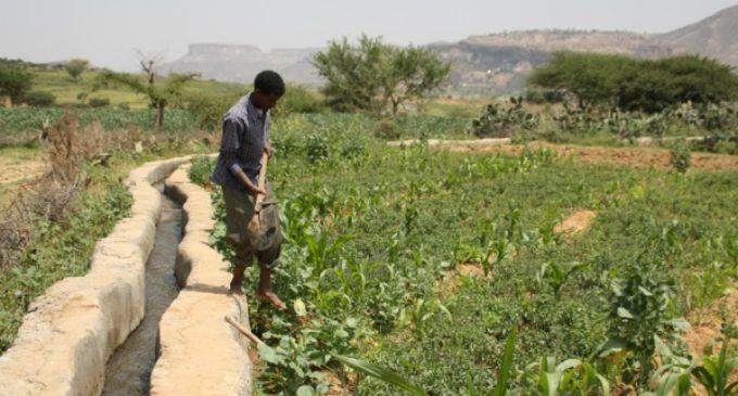 Manos Unidas destinó, en 2016, casi 40 millones de euros a la lucha contra el hambre