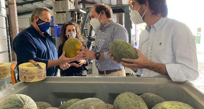Madrid produce 7.600 toneladas de melón al año de 13 variedades locales diferentes