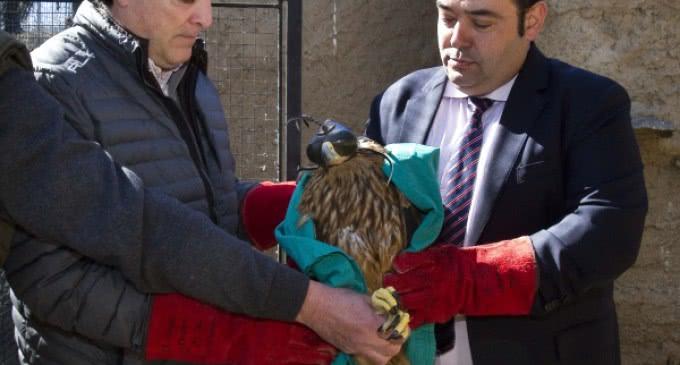 El centro de fauna de Navas del Rey recibe de la Comunidad un ejemplar de águila imperial