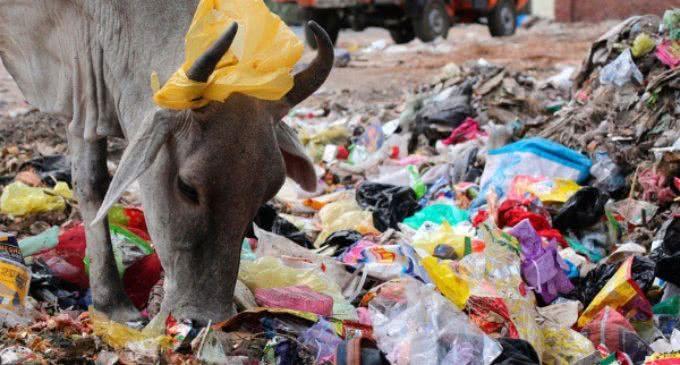 António Guterres, secretario general de la ONU: «En 2050 nuestros océanos tendrán más plástico que peces»