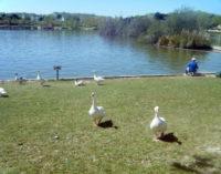 La Comunidad de Madrid reabre los parques de Valdebernardo, Polvoranca y Bosquesur