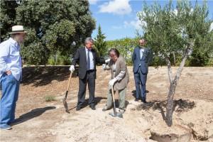Plantacion arbol
