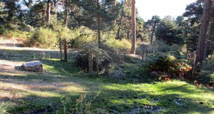 El entorno del Parque Nacional de la Sierra de Guadarrama se enriquece con 60 nuevos ejemplares de especies autóctonas