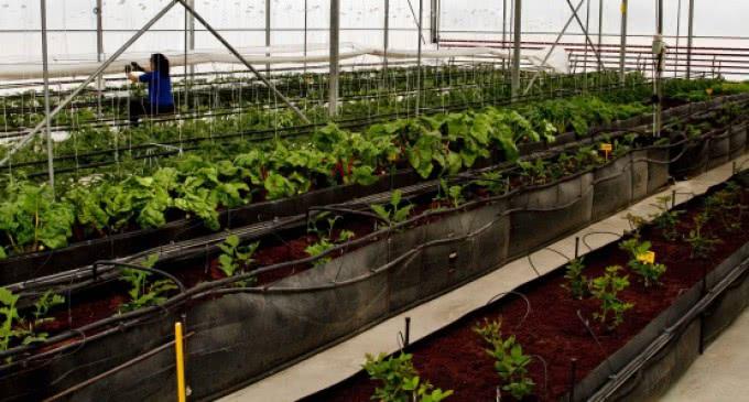 Los agricultores de la región disponen de más de 500.000 plantas autóctonas