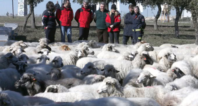 El pastoreo controlado, como medida de prevención de incendios, recibe el impulso de la Comunidad
