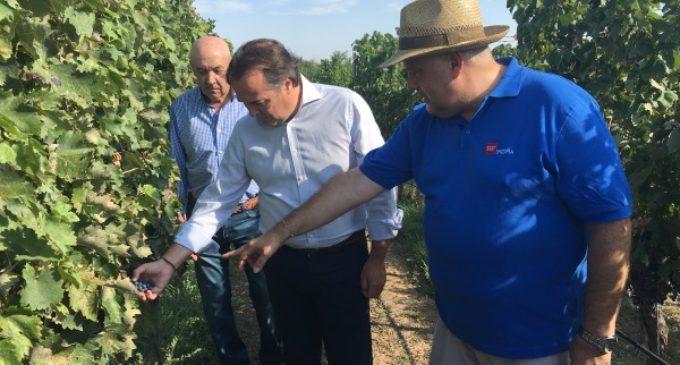 La Comunidad colabora con los viticultores de la región para mejorar la calidad de los vinos de Madrid