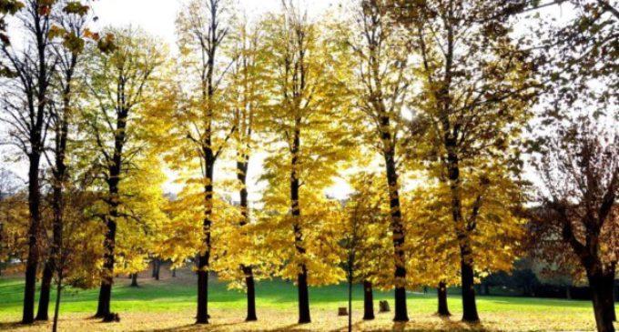 El Tiempo de la Creación: un momento de oración ecuménica