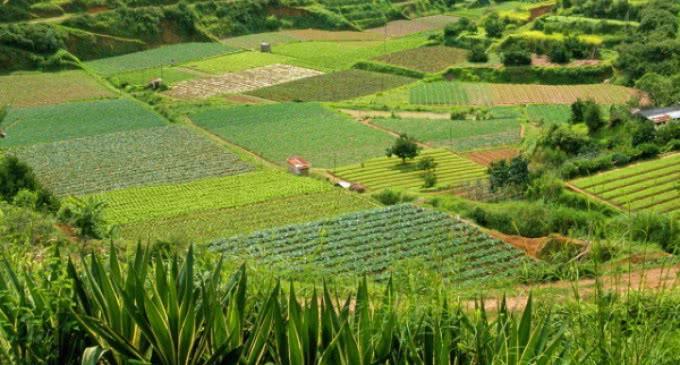Francisco subraya el papel central de la agricultura: »No hay humanidad sin cultivo de la tierra».