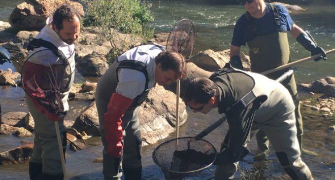 La Comunidad de Madrid garantiza la conservación de la riqueza faunística de ríos y embalses
